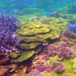 澎湖南方四島珊瑚礁被碾  賴峰偉呼籲珍惜海洋生態