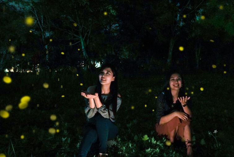 理想大地帶路尋找火金姑  夜遊螢光閃閃的最美秘境