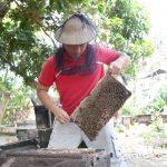 「蜂和小鎮」養蜂人家  蜂兒逐花尋蜜自然甘甜